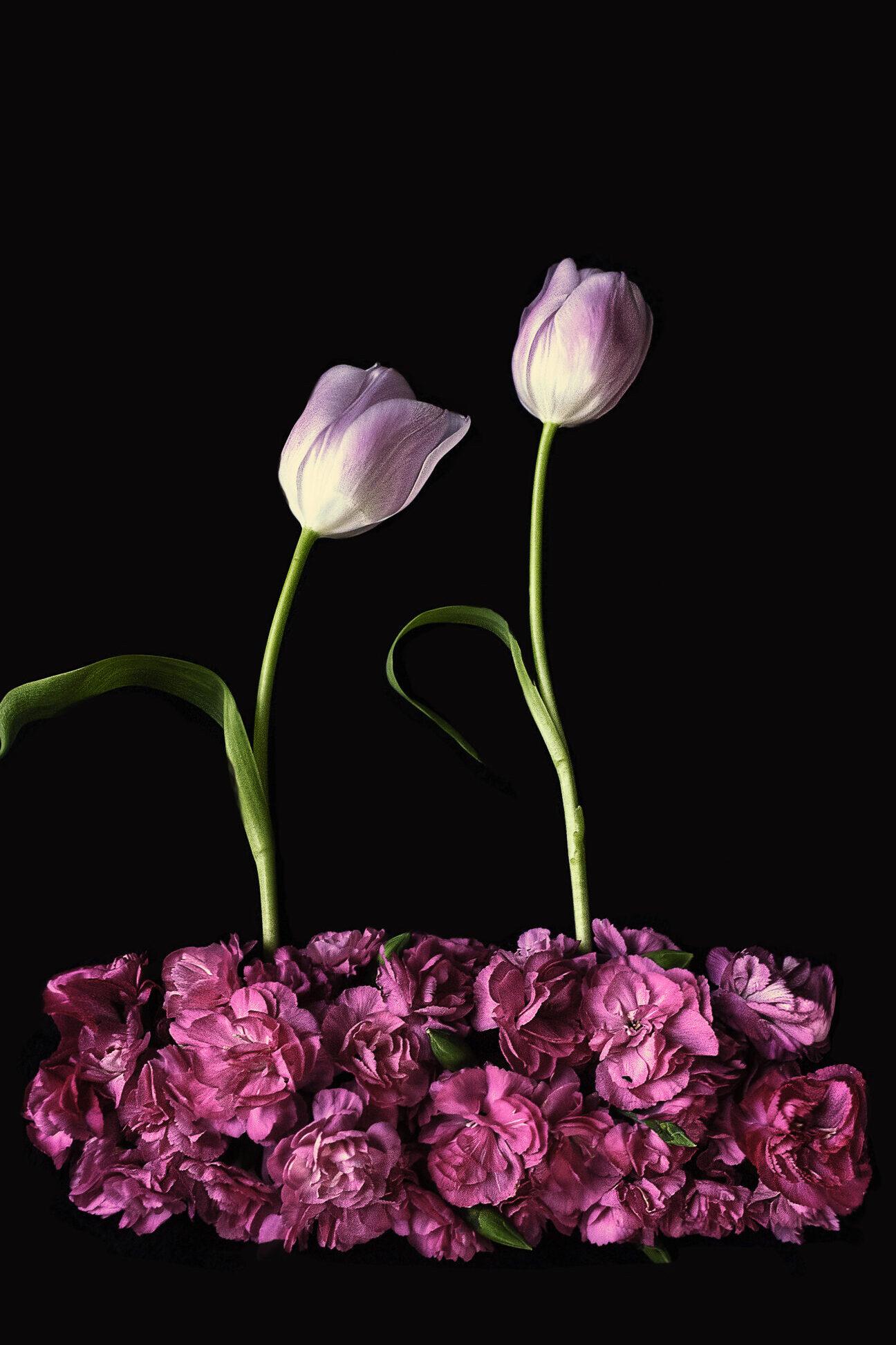 Bloemportret met een bed van roze anjers en twee tulpen
