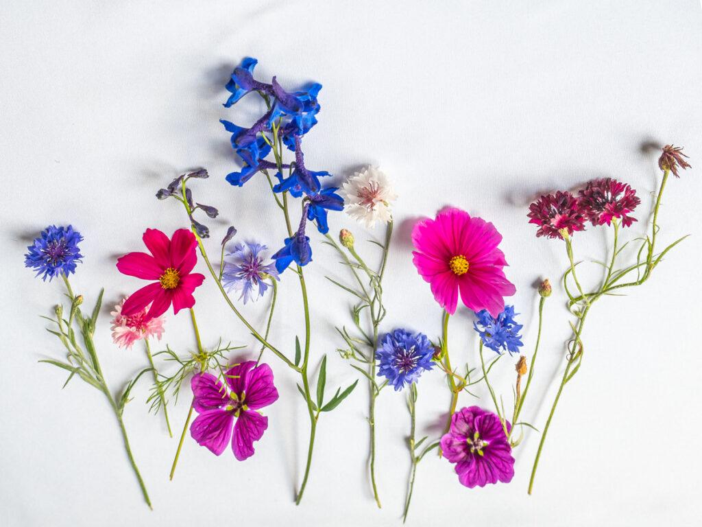 Zomer bloemportret, flatlay., Flower Portrait
