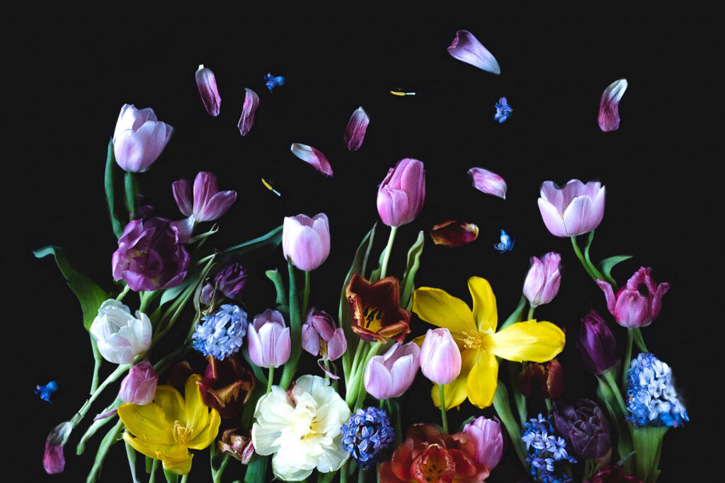 Bloemportret voorjaar