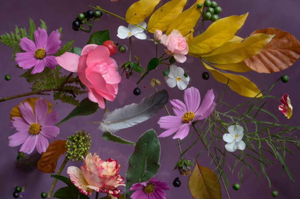 Bloemportret roze met kosmos, rozen, viooltjes
